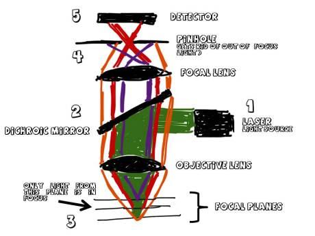 ConfocalMicroscopy